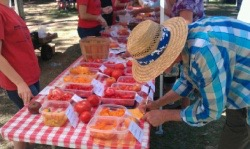 Farmers' Market Tomato Taste-Off and Craft Fair